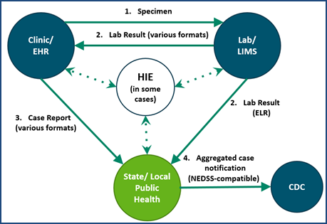 Illustrative example of eCR case reporting The figure above can be understood through the following example: A patient presents at a clinical setting (e.g., hospital, physician's office, community health center or public health clinic) and meets the screening guidelines for chlamydia or gonorrhea (e.g., female, age 20 years and sexually active). Physical specimens are collected and sent to a laboratory for testing. After testing, the laboratory sends the test results to the clinic and, if positive, also to the state or local public health agency. (Some states request reporting of negative results also.) Results might be sent electronically by using HL7 standards or another format. When results are positive, the clinician is also required to send a case report to the state or local public health agency. The case report might be sent by telephone or as a fax, by U.S. Postal Service mail, by manual entry into a web-based system, or by the clinic's EHR as an eCR. Finally, each state aggregates the data they receive for each notifiable condition and sends reports on a regular basis to CDC. This is called case notification. Certain large municipalities and territories also send aggregate reports to CDC. CDC then disseminates the data to internal programs (e.g., DSTDP) that use them for planning, research, reporting and intervention development. CDC further makes the data available to the public (e.g., through the Morbidity and Mortality Weekly Report). The above figure also illustrates that case reporting can be mediated by a health information exchange (HIE) when an HIE organization is operational in a public health agency's jurisdi